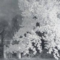 Franz Hecker Apfelbaum Angebot